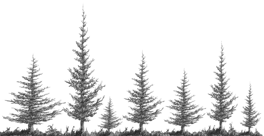 3.2.A2 Squirkle a Realistic Spruce Tree - Drawspace