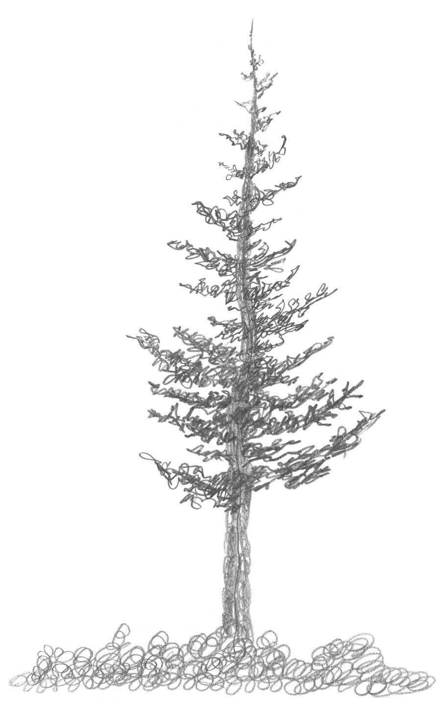 3 2 A2 Squirkle A Realistic Spruce Tree Drawspace